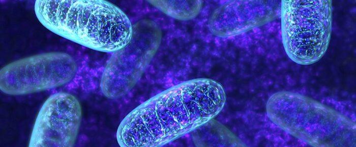 Släktforska med DNA – mtDNA och din moderslinje